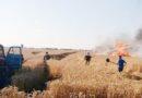 Вогнем знищено 45 гектарів пшениці